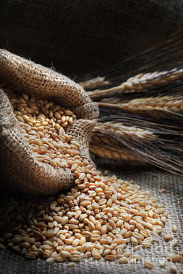 Photograph - Wheat by Jelena Jovanovic