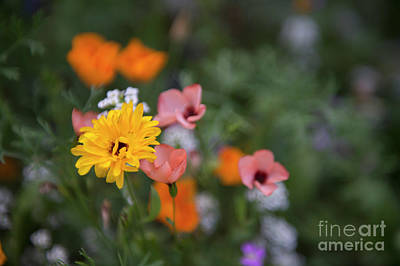 Photograph - Wild Flowers by Jenny Potter