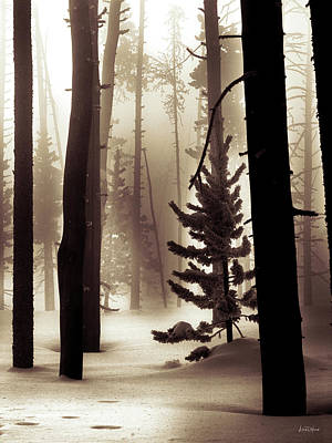 Photograph - Winter Forest by Leland D Howard