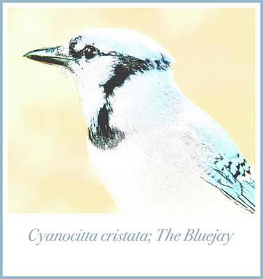 Photograph - Blue Jay, Animal Portrait by A Gurmankin