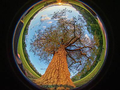 Thomas Kinkade Rights Managed Images - 210 degree Mount Laurel Tree Royalty-Free Image by Louis Dallara