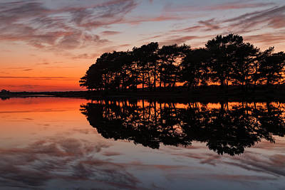 Photograph - New Forest - England by Joana Kruse