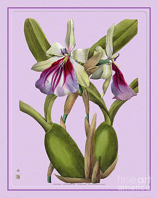 Modern Man Surf - Orchid Flower Orchideae Plantae Exotica by Baptiste Posters