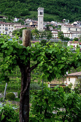 Chris Walter Rock N Roll - Prosecco region, view of hills with vineyards, sunny day by Pavel Rezac
