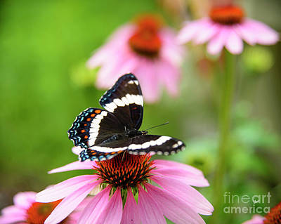 Photograph - Butterfly by Alana Ranney