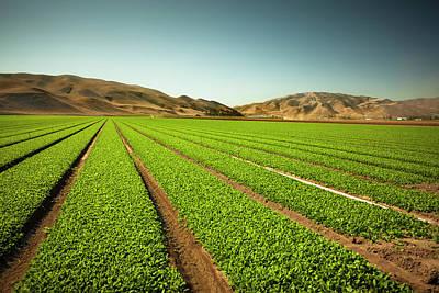 Autumn Photograph - Crops Grow On Fertile Farm Land by Pgiam