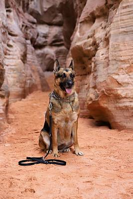 Photograph - German Shepherd by Sagittarius Viking