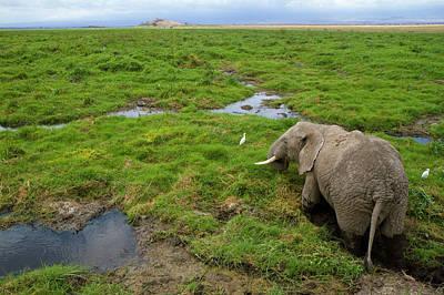 Photograph - Kenya, Amboseli National Park, Elephant by Denis-huot Michel / Hemis.fr