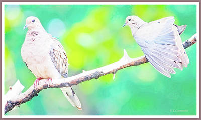 Photograph - Mourning Dove Pair by A Gurmankin