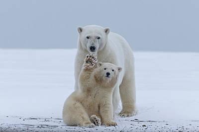 Polar Bear Art Print by Sylvain Cordier