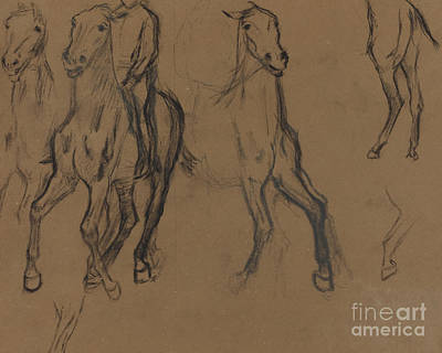 Drawing - Study Of Horses by Edgar Degas