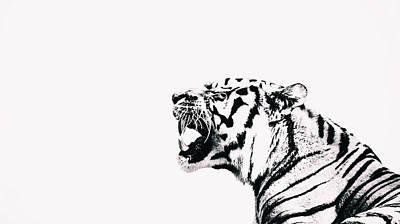 Animals Photos - The Roar by Martin Newman