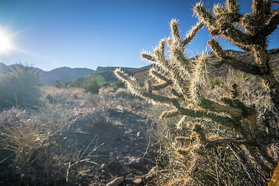 Photograph - Various Plants In Red Rock Canyon Near Las Vegas Nevada by Alex Grichenko