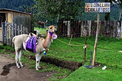 Animal Paintings David Stribbling - Cajamarca - Peru by Carlos Mora