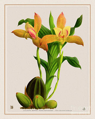 Little Mosters - Orchid Vintage Print on Tinted Paperboard by Baptiste Posters