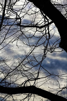 Photograph - Branches And Clouds by Robert Ullmann