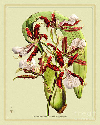 Nighttime Street Photography - Orchid Flower Orchideae Plantae Exotica by Baptiste Posters
