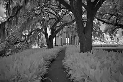 Pop Art Rights Managed Images - NOMA Besthoff Sculpture Garden City Park New Orleans 2019 in Infrared Royalty-Free Image by Sean Gautreaux