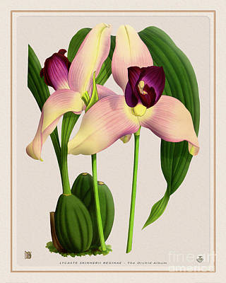 Moody Trees - Orchid Vintage Print on Tinted Paperboard by Baptiste Posters