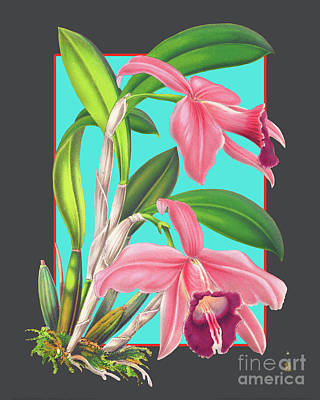 Pop Art - Vintage Orchid Exotic Flower Plant by Baptiste Posters