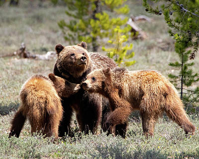 Photograph - 399 And Cubs by Mary Hone