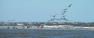 Photograph - Abstract Pelicans In Flight At The Beach Of Atlantic Ocean by Alex Grichenko