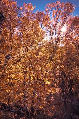 Photograph - Autumnal Park. Autumn Trees And Leaves. Fall by Alex Grichenko