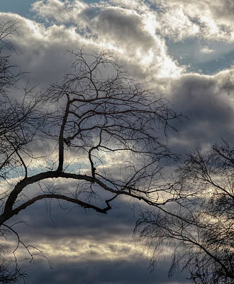 Photograph - Late Afternoon Clouds Sky And Trees by Robert Ullmann