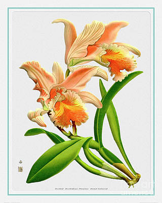 Just Desserts - Orchid Flower Orchideae Plantae Antique by Baptiste Posters