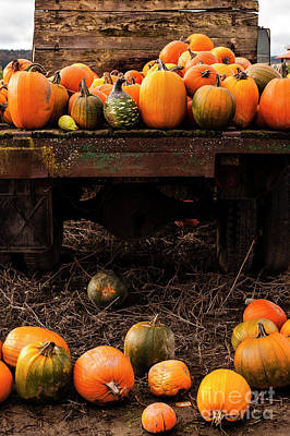 Grateful Dead - Pumpkin Patch With Old Flat Bed Truck  by Jim Corwin