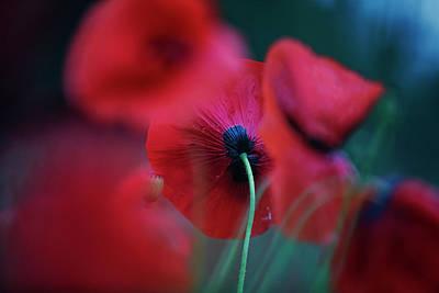 Aretha Franklin - Red Corn Poppy Flowers by Nailia Schwarz