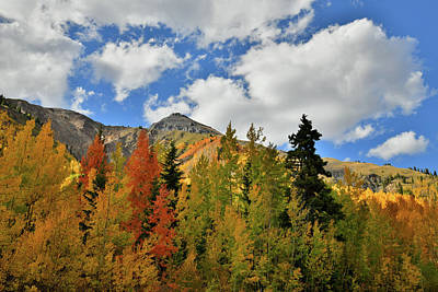 Photograph - Red Mountain Pass Aspens by Ray Mathis