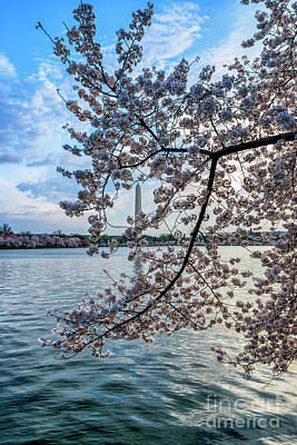 Photograph - Washington Monument Cherry Blossoms by Thomas R Fletcher