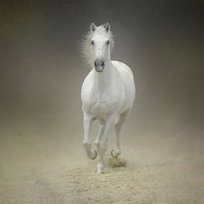On The Move Photograph - White Horse Galloping by Christiana Stawski