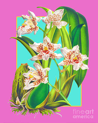 Olympic Sports - Vintage Orchid Exotic Flower Plant by Baptiste Posters