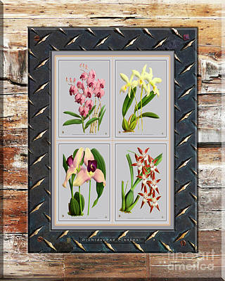 Mixed Media Royalty Free Images - Orchids Antique Quatro on Rusted Metal and Weathered Wood Plank Royalty-Free Image by Baptiste Posters