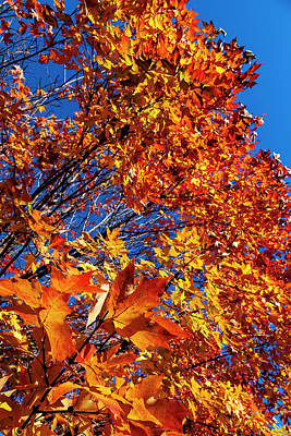 Photograph - Fall Leaves And Trees by Robert Ullmann