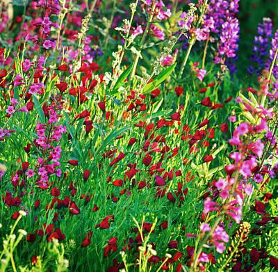 Botanical Photograph - Phoenix Botanical Gardens by Richard Felber