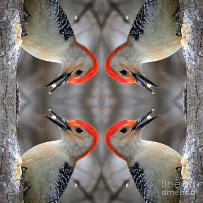 Photograph - Red Bellied Woodpecker by Rick Rauzi
