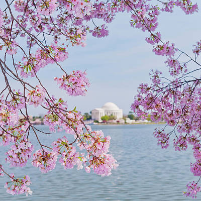 Jefferson Memorial Photograph - Usa, Washington Dc, Cherry Tree In by Tetra Images