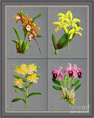 Stellar Interstellar - Orchids Quatro Classic Collage  by Baptiste Posters