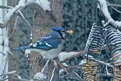 Photograph - Blue Jay by Ann E Robson