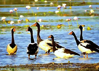 Girl Wall Art - Photograph - 6 Magpie Geese by Joan Stratton
