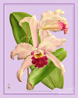 Kitchen Spices And Herbs - Orchid Flower Orchideae Plantae Oriental by Baptiste Posters