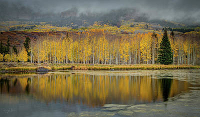 Photograph - Aspen Row by Richard Raul Photography