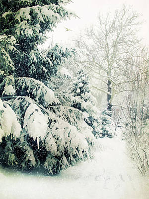 Photograph - Snow On Evergreen by Jessica Jenney
