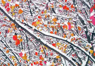 Photograph - Snowfall On Autumn Leaves by Jessica Jenney