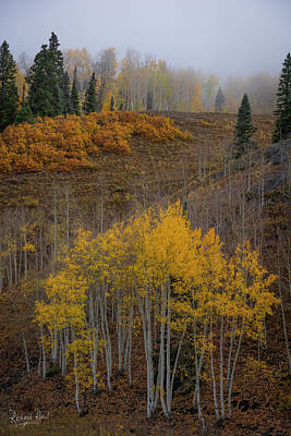 Photograph - Cimarron Gold by Richard Raul Photography