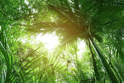 Photograph - Canopy Of Jungle by Les Cunliffe