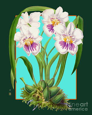 World War 2 Action Photography - Vintage Orchid Exotic Flower Plant by Baptiste Posters